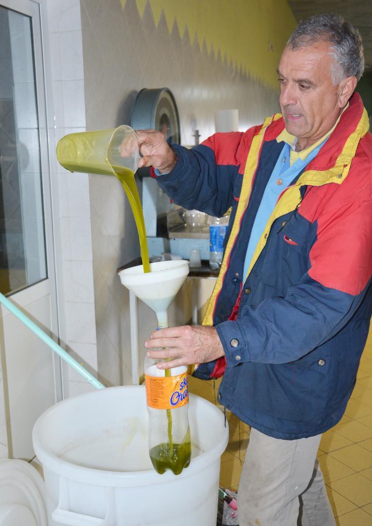 Production and processing of Olive Oil, Oleo Dorato, Pula, Istria